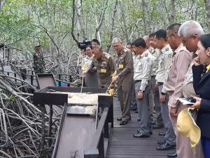 องคมนตรี ติดตามโครงการพัฒนาป่าไม้ปากแม่ปราณบุรี อันเนื่องมาจากพระราชดำริ