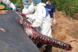 อึ้ง! ผ่าซากวาฬหัวทุยฟันหายเกลี้ยงปาก คาดแอบลักลอบตัดทำของขลัง ส่งชิ้นเนื้อตรวจหาสาเหตุการตาย พบตายแล้ว 21 ตัว