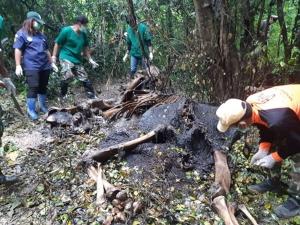 พบช้างป่าละอูแท้งลูกตายในป่าข้างถนนสายห้วยสัตว์ใหญ่-บ้านป่าละอูบน