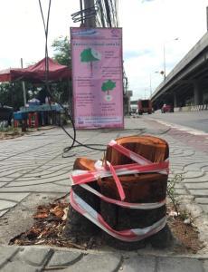 รถไฟฟ้าสายสีชมพูขอโทษสังคม หลังโดนจวกยับตัดต้นไม้เหลือแต่ตอ หลังชี้แค่ล้อมย้าย
