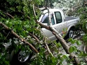 ฝนตกลมกระโชกแรงพัดต้นไม้ล้มทับรถยนต์พัง บ้านเสียหาย 10 หลัง ที่สุไหงโก-ลก