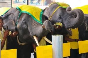 สวนนงนุชพัทยา นำช้างแสนรู้ร่วมหล่อเทียนพรรษาสืบสานประเพณีไทย