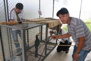 พบนกเงือก-สัตว์ป่าคุ้มครองหลุดกรงคนแอบเลี้ยงเกาะต้นไม้กลางเมืองพิษณุโลก
