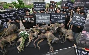 """เกษตรกรผู้เลี้ยงสุนัขเกาหลีใต้จก """"เนื้อหมา"""" กินต่อหน้ากลุ่มต่อต้าน"""