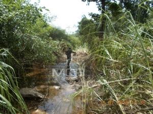 (ชมคลิป)พบจระเข้น้ำจืดพันธุ์ไทยแท้ใกล้สูญพันธุ์ วางไข่บริเวณวังข่า ห้วยแม่เพรียง