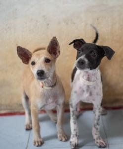 """""""มูลนิธิเพื่อสุนัขในซอย""""เพิ่มโอกาสช่วยหมา-แมวจรจัด ผ่านช้อปปิ้งออนไลน์""""รีเบทแมงโก้"""""""