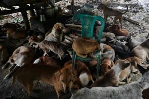 ทุนไม่พอฉีดวัคซีน-ทำหมัน พม่าได้แนวทางใหม่เปิดเสียงสวดมนต์ผ่อนคลายสุนัขจรจัดหวังช่วยคุมประชากร