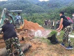 ผงะ! ชาวบ้านพบช้างป่าเสียชีวิตในสวนทุเรียนใกล้อุทยานแห่งชาติบางลาง