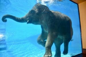 สวนสัตว์เปิดเขาเขียวจัดกิจกรรมพิเศษ 28 ก.ค. เนื่องในโอกาสวันเฉลิมพระชนมพรรษา