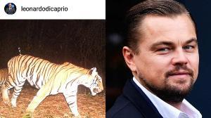 """คนไทยปลื้ม """"ลีโอนาร์โด"""" โพสต์ขอบคุณเจ้าหน้าที่ไทยช่วยเพิ่มจำนวน """"เสือ"""" ในป่าใหญ่"""