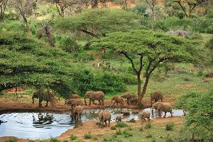 Elephant herd at waterhole, Kenya