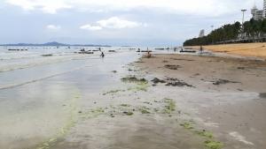 ฝนหนักทำน้ำทะเลอ่าวจอมเทียนพัทยาเปลี่ยนสี ส่วนคลองพัทยาใต้ขยะเกลื่อน