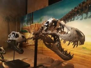 """ททท.ร่วม มมส จัดทัวร์หยุดยาววันแม่ """"พาลูกไปฝึกล่าไดโนเสาร์"""" ขุดซากฟอสซิลสถานที่จริง"""
