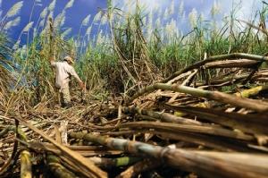 ปรับทิศ! ชูสังคมและสิ่งแวดล้อม พัฒนาอุตสาหกรรมอ้อย-น้ำตาล