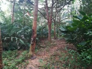 ในป่าสวนยางที่ไม่มียาฆ่าหญ้ากลางร่องสวนสามารถปลูกพืชสวนอาศัยแดดรำไร ขณะเดียนวกันช่วยเก็บน้ำและความชื้นไว้ให้ดินมีน้อเลี้ยงต้นยาง