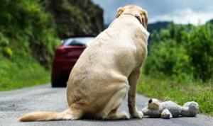 ญี่ปุ่นกับความรักที่สุนัขและแมวชะเง้อหา
