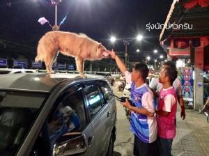 """""""สุนัขเมืองชล"""" เกาะหลังคารถ ตำรวจ-กู้ภัยล่อเท่าไหร่ไม่ยอมลง สุดท้ายไปส่งที่บ้านถึงยอมแต่โดยดี"""