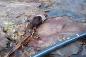 ผงะ! ชาวบ้านพบสัตว์ประหลาดติดกับดัก แจ้งกู้ภัยนำปล่อยป่า