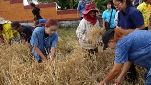 เกษตรจังหวัดระยอง เปิดโรงเรียนเกษตรกรข้าวต้นแบบ