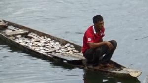 ปลาเลี้ยงกระชังน้ำมูลน็อกน้ำตายกว่า 15 ตัน ทำเจ้าของช็อกเข้า รพ.ไปด้วย