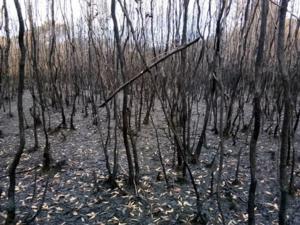 ปภ.สงขลา เตรียมประกาศยุติสถานการณ์ไฟไหม้ป่าใน ต.ปากรอ หลังเริ่มคลี่คลาย