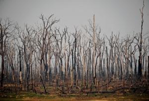 ภาพพื้นที่ถูกไฟไหม้ในป่าฝนแอมะซอนใกล้รัฐอาบูนารอนโดเนียในบราซิล