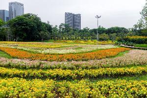สวนดอกรวงผึ้งและดอกไม้อื่น ๆ หลากสีสัน