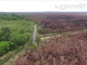 ป่าพรุนครศรีฯ สิ้นสภาพพื้นที่ชุ่มน้ำหลังเกิดไฟป่านานกว่า 1 เดือน