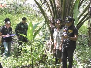จนท.เข้าตรวจสอบสวนปาล์มในตรังที่คนไทยและต่างชาติได้รับสัมปทาน