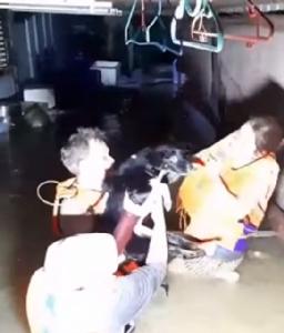 ชื่นชม! เจ้าหน้าที่ลงพื้นที่เสี่ยงภัยเข้าช่วยเหลือสุนัขประสบภัยน้ำท่วม
