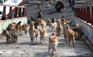 คนญี่ปุ่นสมัยก่อนมีสรีระดี ต่างจากปัจจุบันที่เหมือนแมว
