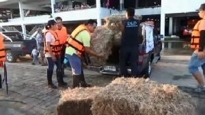 เร่งขนหญ้า-อาหารเม็ดช่วยชีวิตวัวควายและสุนัขติดเกาะน้ำท่วมอุบลฯ