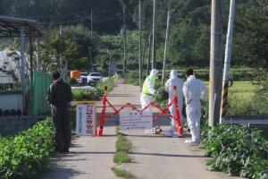 เกาหลีใต้ยืนยันพบ 'ไข้หวัดหมูแอฟริกา' ระบาด เตรียมเชือดทิ้งเกือบ 4,000 ตัว