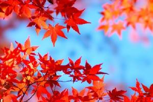 TOP 10!!ความสวยงามน่าประทับใจกับฤดูใบไม้ร่วงยอดนิยมในเกียวโต