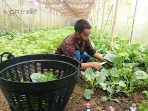 """เกษตรกรต้นแบบเผย """"ผักอินทรีย์"""" ตลาดยังต้องการสูง คนกินเยอะคนผลิตน้อย"""