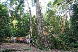 ต้นไม้ยักษ์ ไฮไลท์สำคัญของหมู่บ้านจุฬาภรณ์ฯ 10