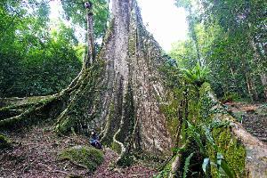 """""""เบตง"""" มุมต่าง...ตะลึงต้นไม้ยักษ์ หลงรักเส้นทางนักสู้ ที่""""บ้านจุฬาภรณ์ฯ 10""""/ปิ่น บุตรี"""
