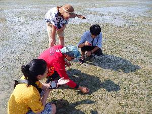 """""""เกาะลิบง"""" แหล่งหญ้าทะเลใหญ่ที่สุดในไทยมีมากถึง 11 ชนิด"""