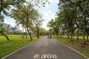 เส้นทางวิ่งในสวนอันร่มรื่นที่อุทยานจตุจักร