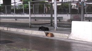 ปศุสัตว์นนทบุรีประกาศเขตเฝ้าระวังโรคพิษสุนัขบ้า