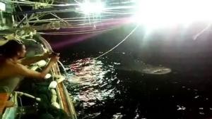 ฮือฮา! ประมงชายฝั่งชุมพรพบฉลามวาฬว่ายน้ำอวดโฉม 3 คืน ระบุไม่มาตัวเดียวหลังเพื่อนเจอด้วย