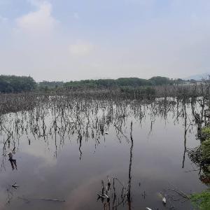 ชาวเมืองชลบุรี ตะลึงประกาศขายที่ดิน 20 ไร่ ในเขตป่าชายเลน 460 ล้านบาท รมว.ทส.สั่งกรมทะเลเร่งตรวจสอบด่วน