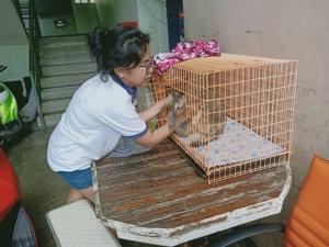 """อำมหิต.. """"ศรีเงิน"""" แมวไทย ถูกคนใจโหดกรีดท้องไส้ทะลักทิ้งกลางแฟลตเอื้ออาทร ศรีราชา"""