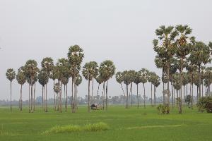 """ปตท. ต่อยอดโครงการปลูกป่า ขยายผลแนวคิด """"สวนป่าครัวเรือน"""" ทั่วประเทศ เน้นการเพิ่มพื้นที่สีเขียวระดับครัวเรือนควบคู่กับการดูแลป่า ประเดิมพื้นที่ ตำบลห้วยลึก เพชรบุรี"""