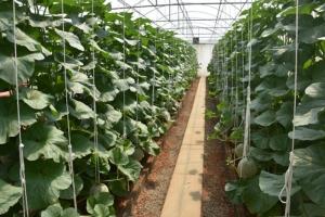 """โคราชรุกหนัก! หนุนเกษตรปลอดภัยเลิกใช้สารเคมี ชู """"รักจังฟาร์ม"""" สวนเมลอนปลอดสารพิษนำร่องอีสานใต้"""