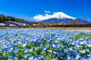 8 สิ่งที่คุณต้องทำเมื่อไปเที่ยวที่ภูเขาไฟฟูจิและทะเลสาบYamanakako
