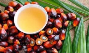 น้ำมันปาล์ม-สินค้าเกษตรต้นทุนพุ่ง สูญ 6.5หมื่นล.แบนพาราควอต