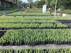 """""""อัศวิน"""" ชวนคนกรุง ร่วมเพาะไม้กล้า 1 ล้านต้น เพื่อช่วยดูดซับมลพิษฝุ่น PM 2.5"""