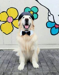 """งานนี้มาเต็ม!? แก๊งน้องหมาเตรียมยกขบวนร่วมงาน """"The Mall Dog Town 2019"""""""