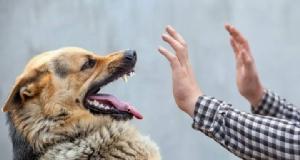 หนุ่มบุรีรัมย์ตายจากพิษสุนัขบ้า รายที่ 3 ของประเทศในปีนี้